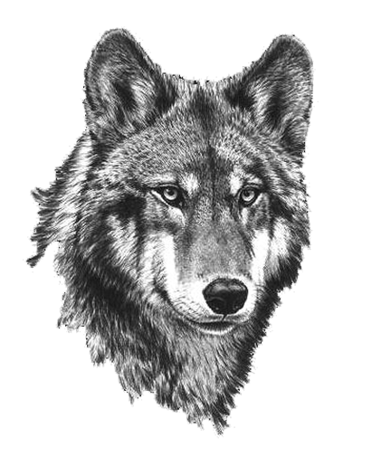 clip art stock Wolf clipart. Image picture black and