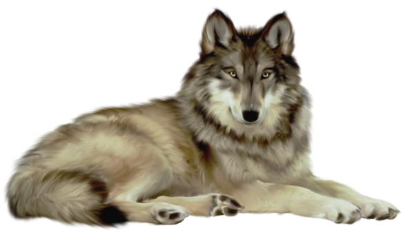 png free Transparent wolf animal pinterest. Wolves clipart
