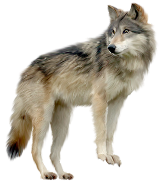 clip library Wolf a d o. Wolves clipart