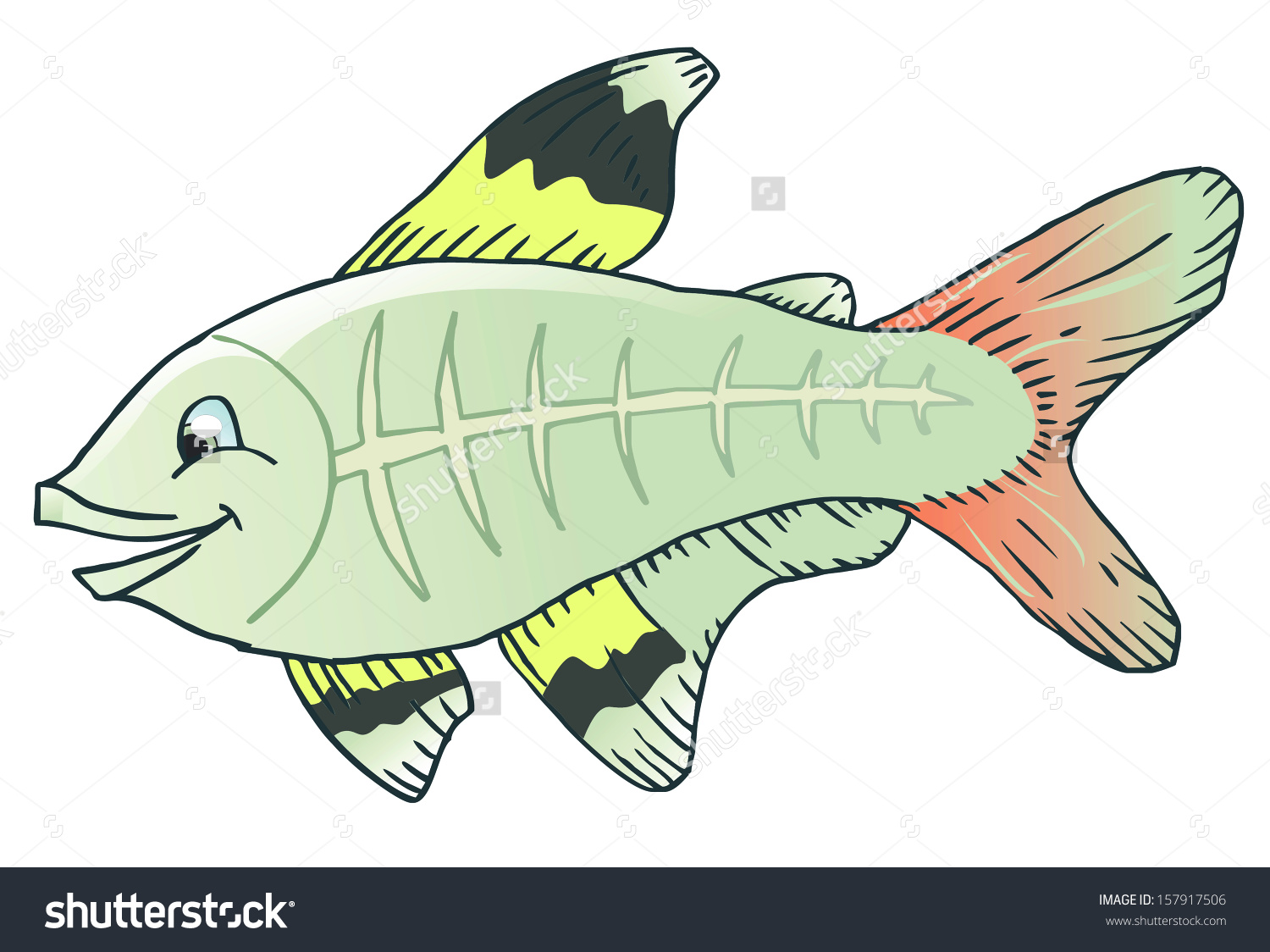 royalty free X ray fish clipart.  clipartlook