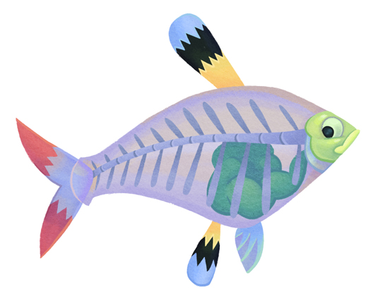 clip art  clipartlook. X ray fish clipart