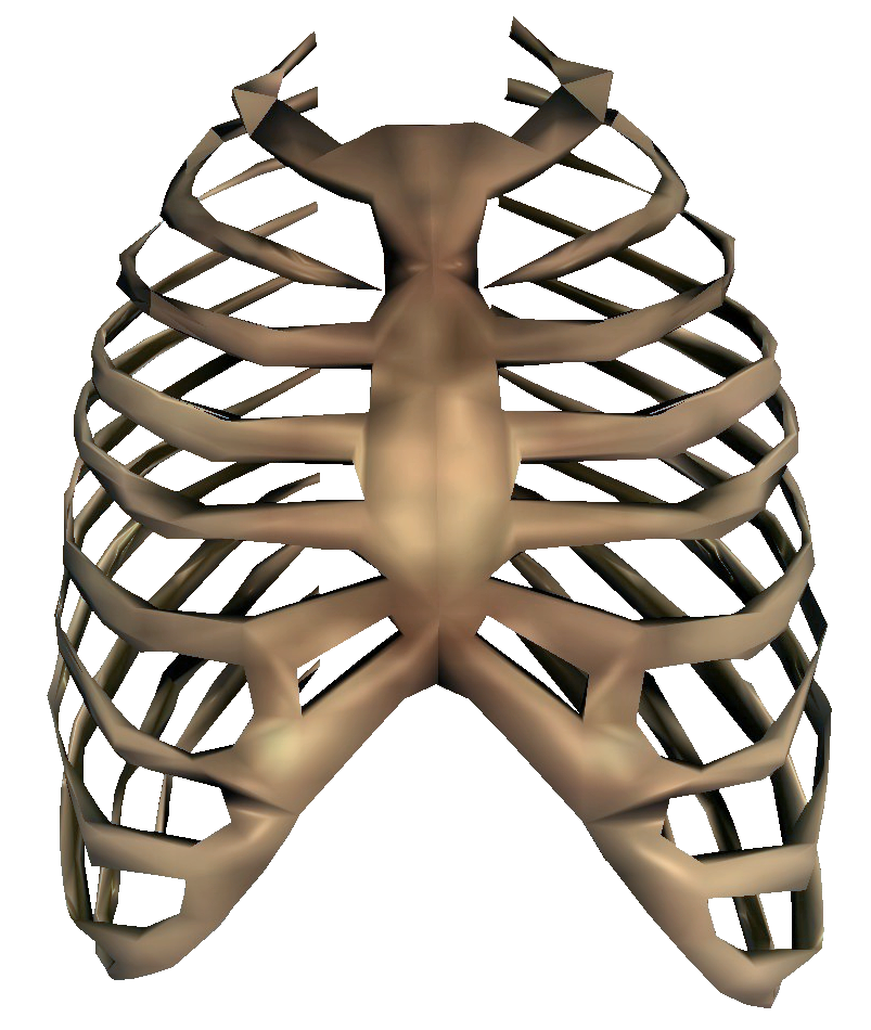 graphic free stock Rib clipart group cage. Bones transparent file