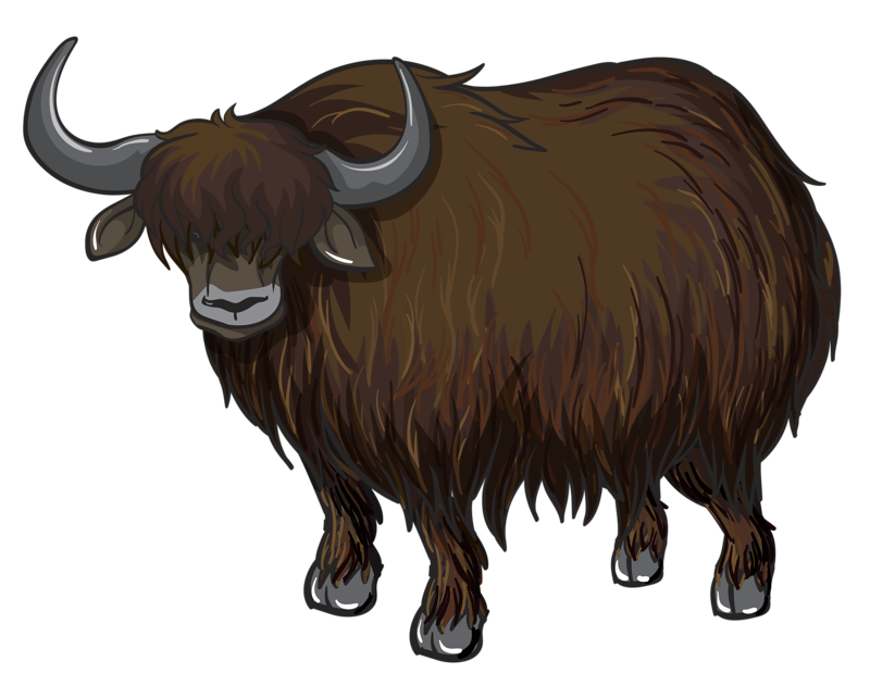 clipart free library Collection of free Ox drawing yak