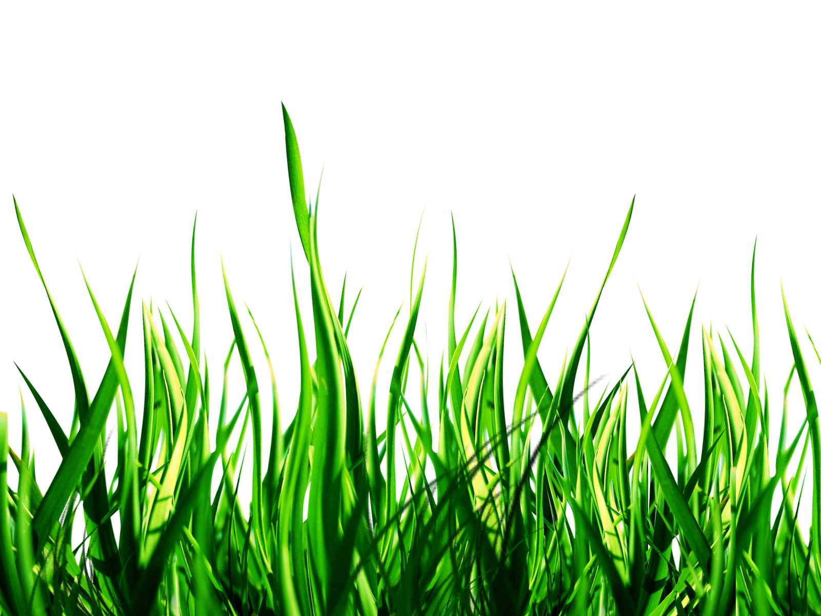 clip art library download Lawn picsart photo studio. Yard clipart grass yard