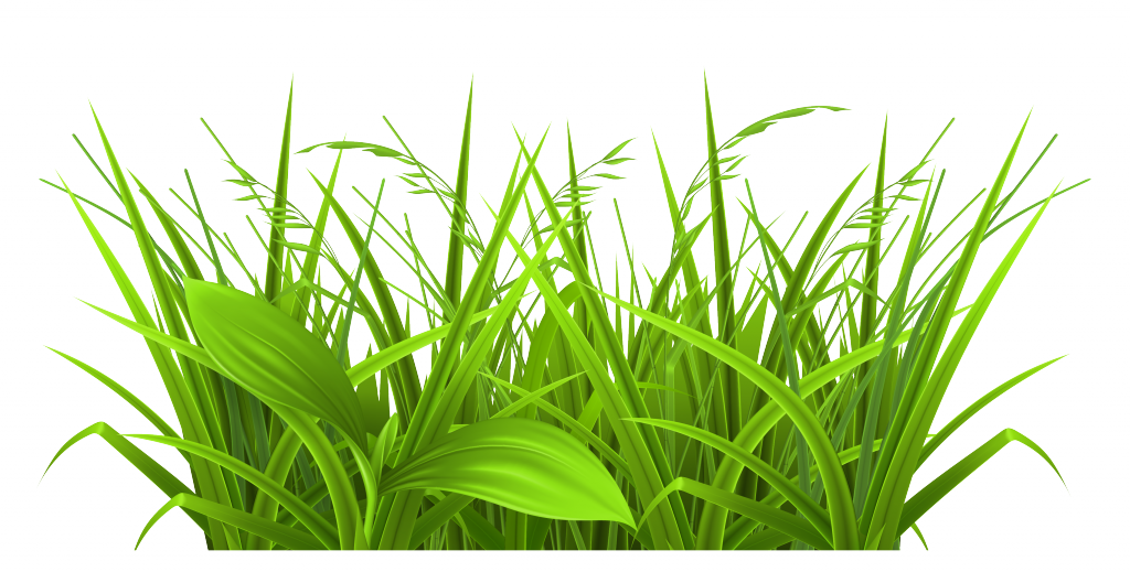 png free download Yard clipart grassy path. Lawn frames illustrations hd