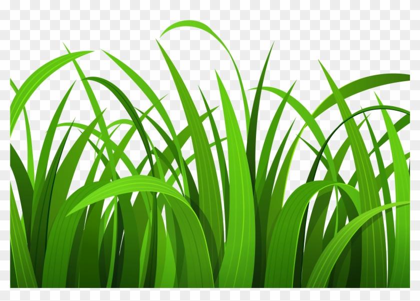 vector transparent stock Lawn grass free transparent. Yard clipart safari.