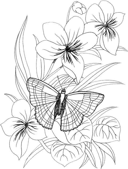 clip freeuse Butterfly Coloring Pages