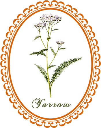 picture royalty free download Yarrow