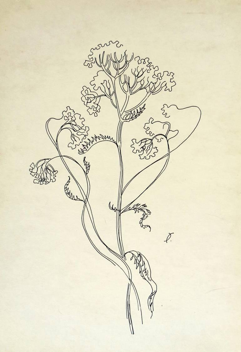 clipart royalty free library yarrow drawing damiana #149451999
