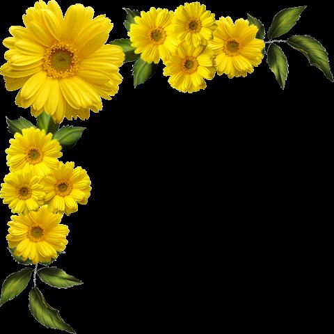 clip art transparent Yellow Daisies Transparent Clipart