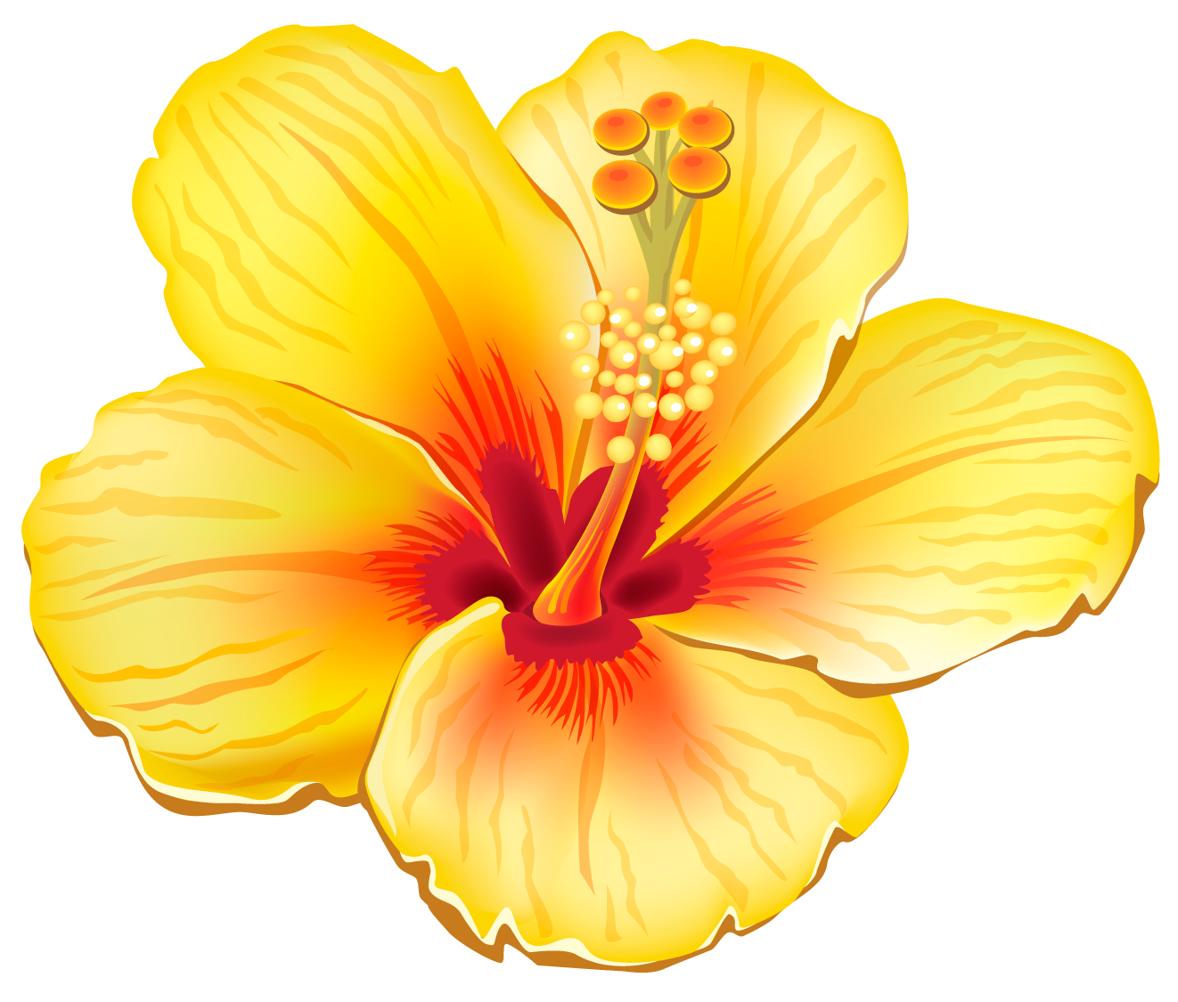 banner free download Tropical drawing exotic flower. Yellow png clipart picture