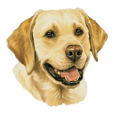 clipart Yellow lab clipart. Free labrador cliparts download