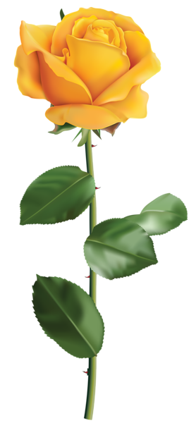 graphic royalty free stock Yellow Rose Transparent PNG Clip Art Image