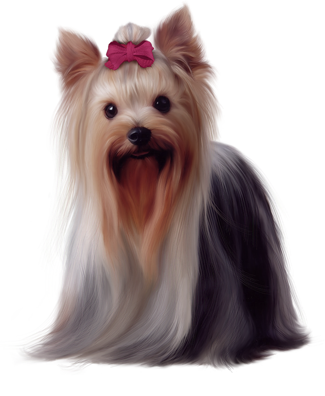 svg download Yorkie clipart. Painted yorkshire terrier png.