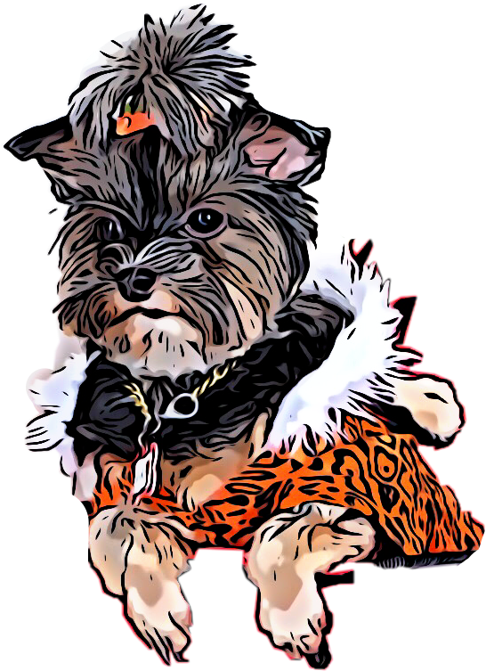 jpg black and white Yorkie clipart. Pin by z fern.