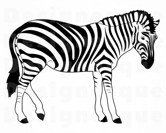 clip free library Svg files for cricut. Zebra clipart