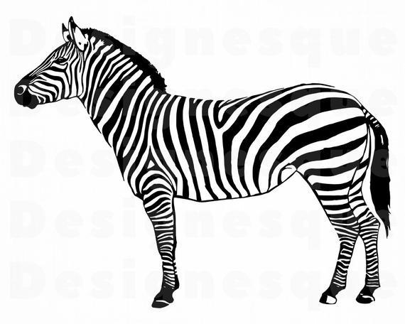 graphic library stock Zebra clipart. Svg files for cricut.