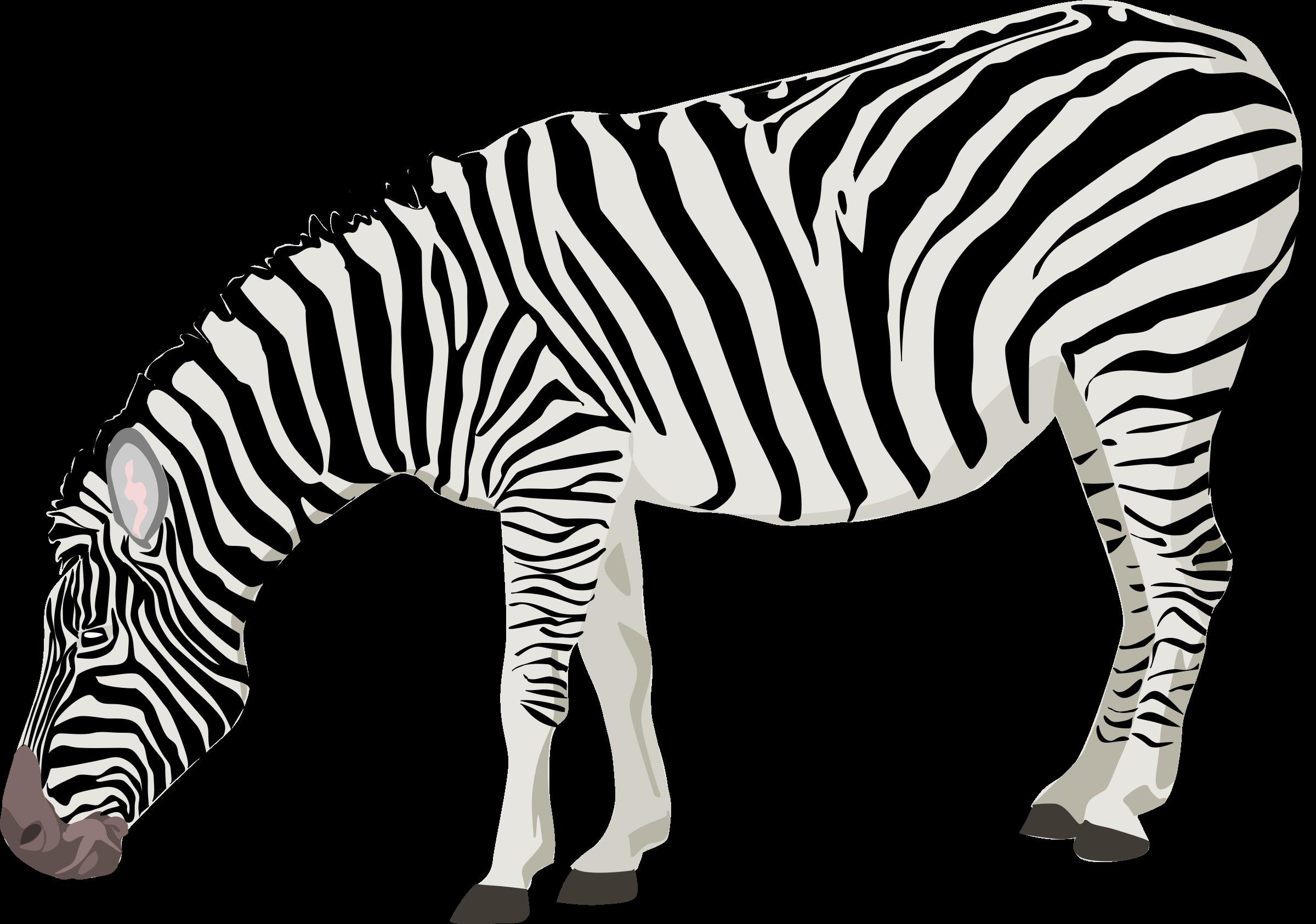 clipart transparent download Zebra clipart. File free on dumielauxepices