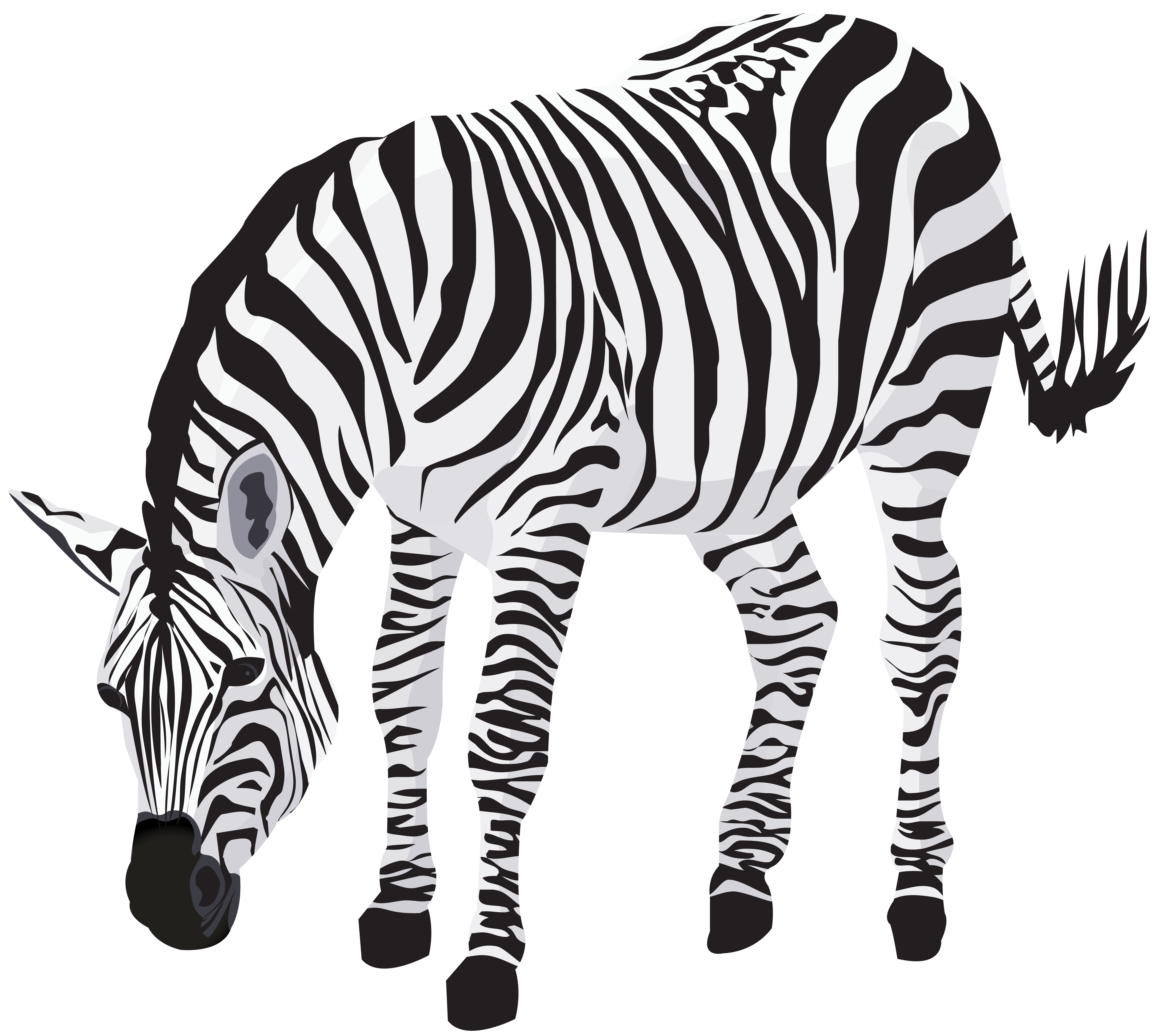 clipart transparent stock Image gallery yopriceville high. Zebra clipart.