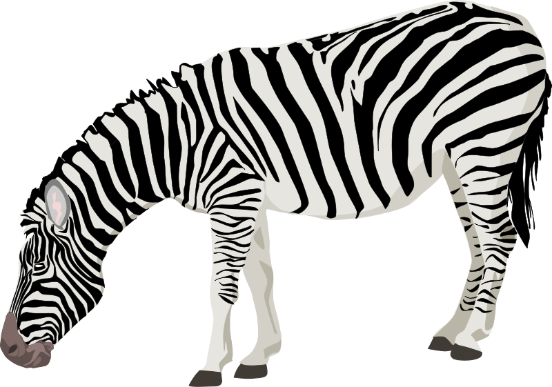 graphic black and white download Panda free images lackclipart. Zebra print clipart