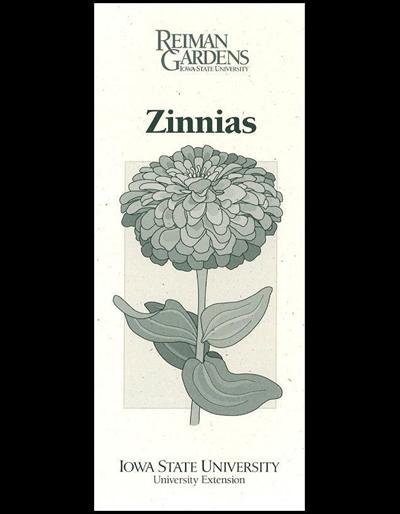 vector royalty free Zinnias