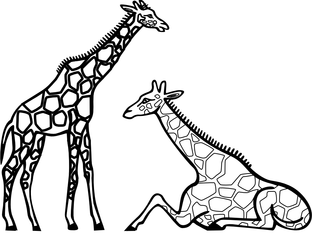 royalty free library Giraffe outline drawing at. Zoo animals clipart black and white.