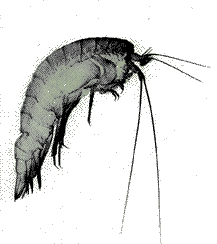 banner freeuse Zooplankton drawing. Murky waters earth island