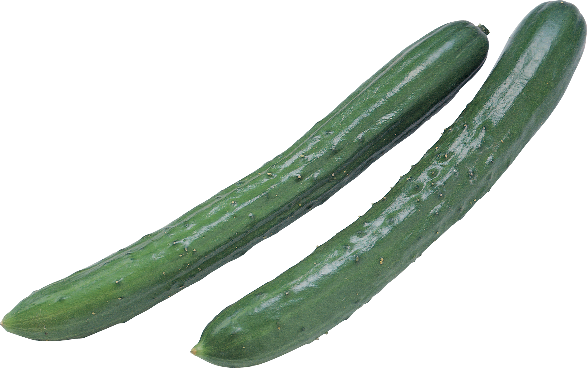 picture free library Zucchini clipart happy. Pipino free on dumielauxepices